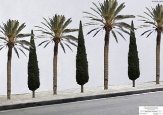 Palm tress and cypres