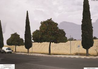 Lefkosia, Digenis Akritas avenue with cypress and orange trees.